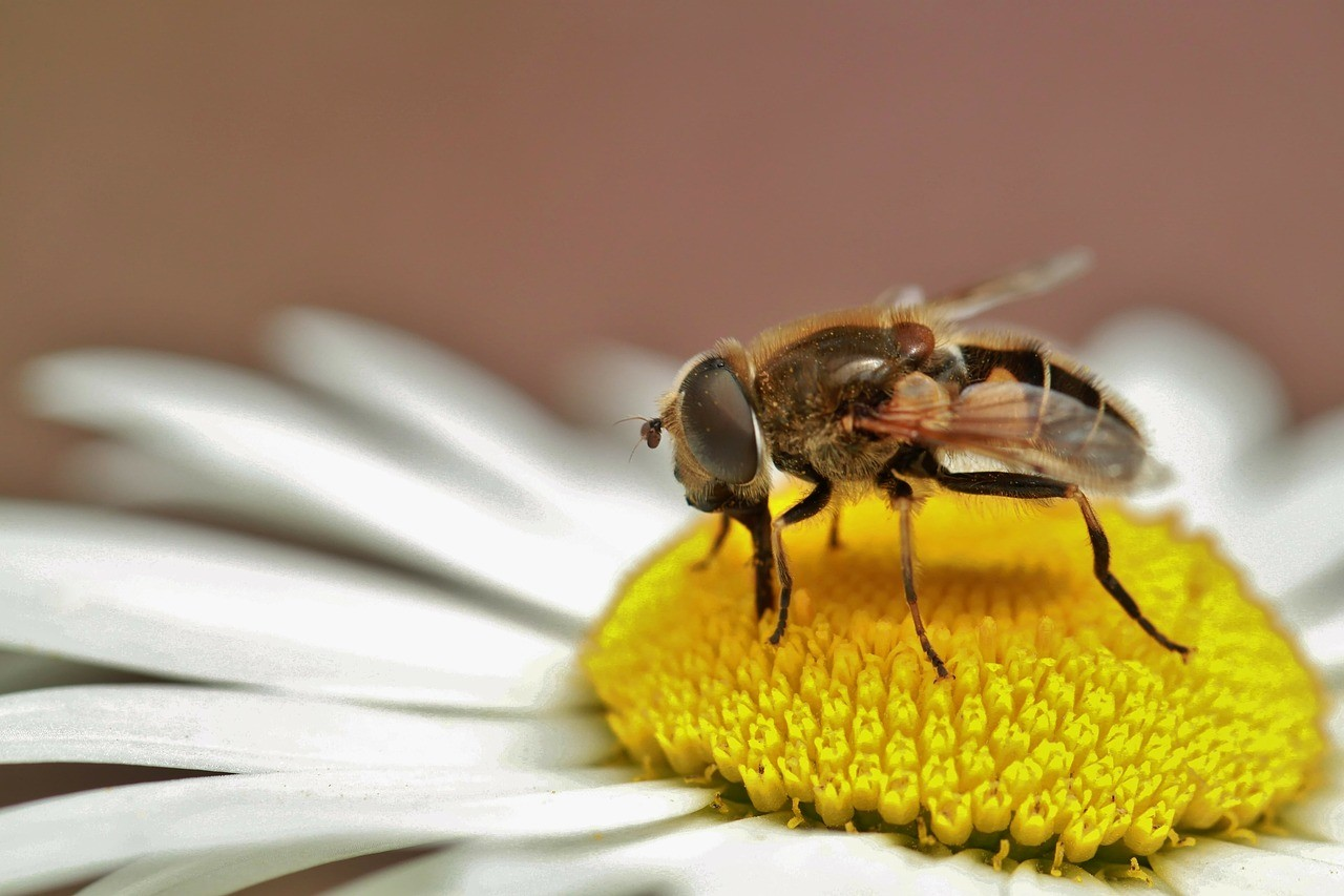 hoverfly-273549_1280