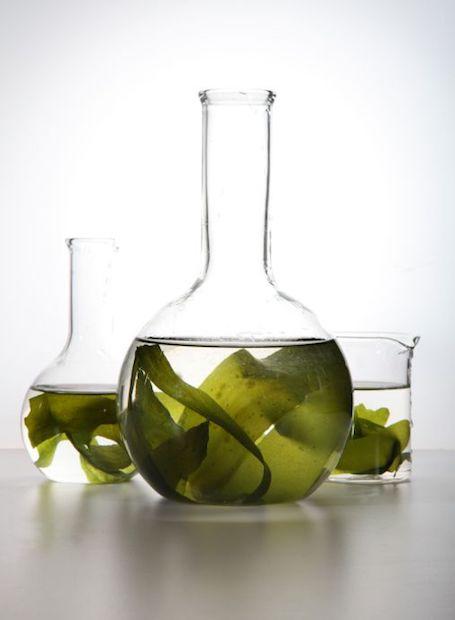 omega-3-de-algas-conheca-seus-beneficios