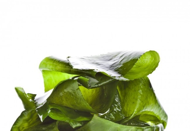 beneficios-das-algas-que-vao-te-surpreender
