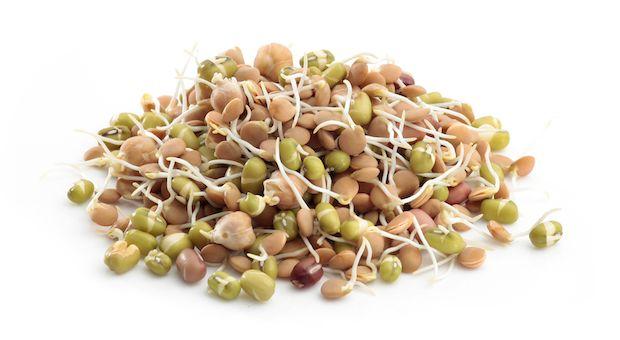por-que-germinar-castanhas-e-sementes-5