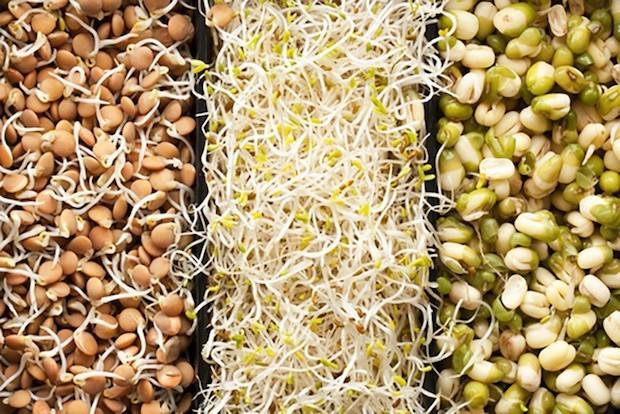 por-que-germinar-castanhas-e-sementes